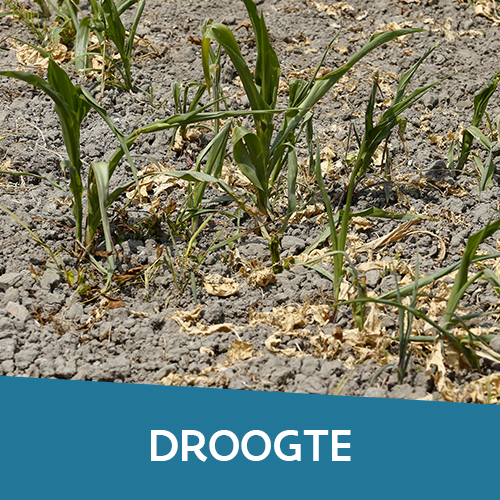 Thema droogte